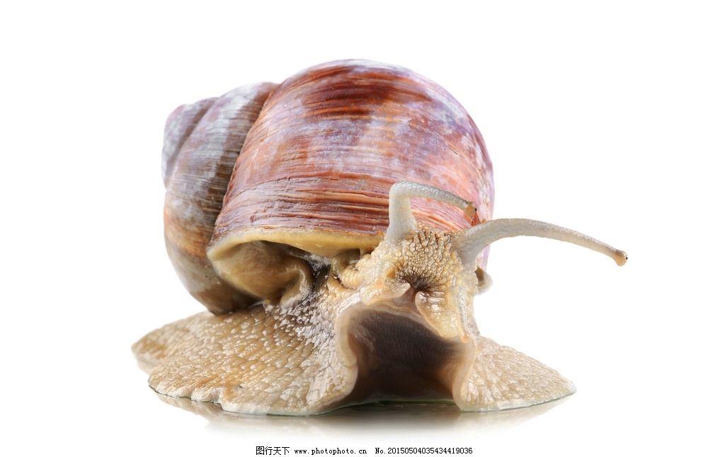唯美蜗牛 虫子 可爱 动物 摄影