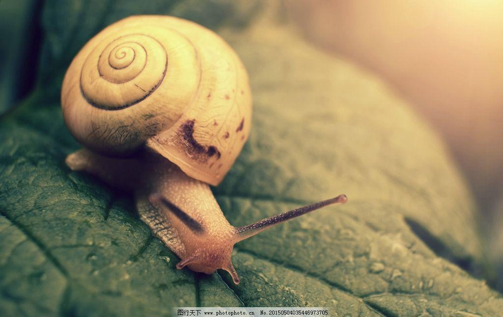 唯美 虫子 昆虫 蜗牛 可爱 动物 软体 摄影 生物世界 昆虫 300dpi jpg