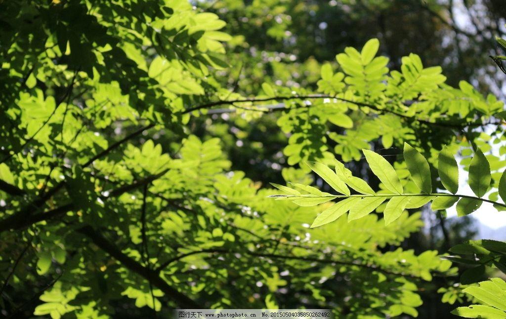 树叶 树枝 绿叶 阴影 阳光 自然 摄影 生物世界 树木树叶 72dpi jpg