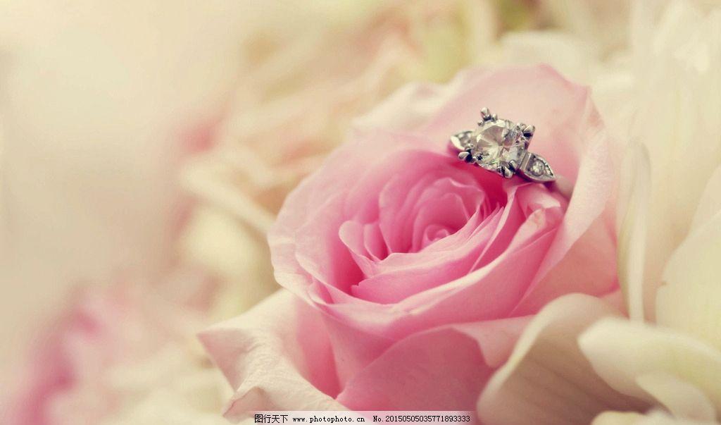 唯美钻石玫瑰图片_花草_生物世界_图行天下图