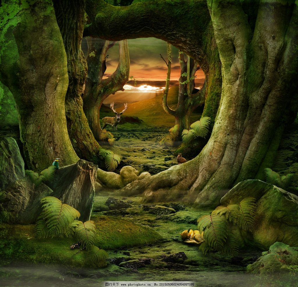 魔幻森林场景高清图图片
