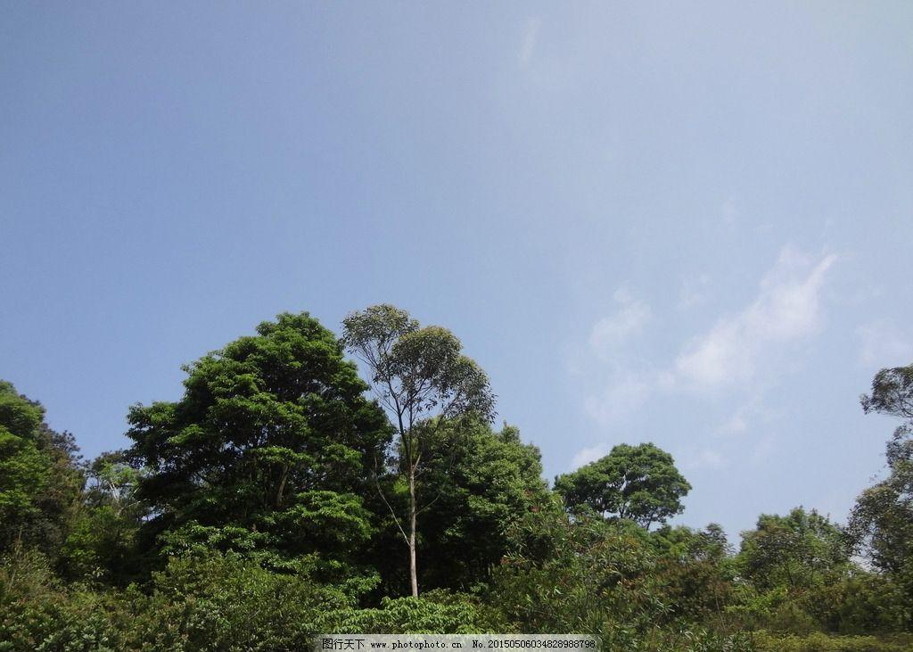 森林 天空 树林 大树 树叶 蓝天 白云 摄影 自然景观 自然风景 350dp