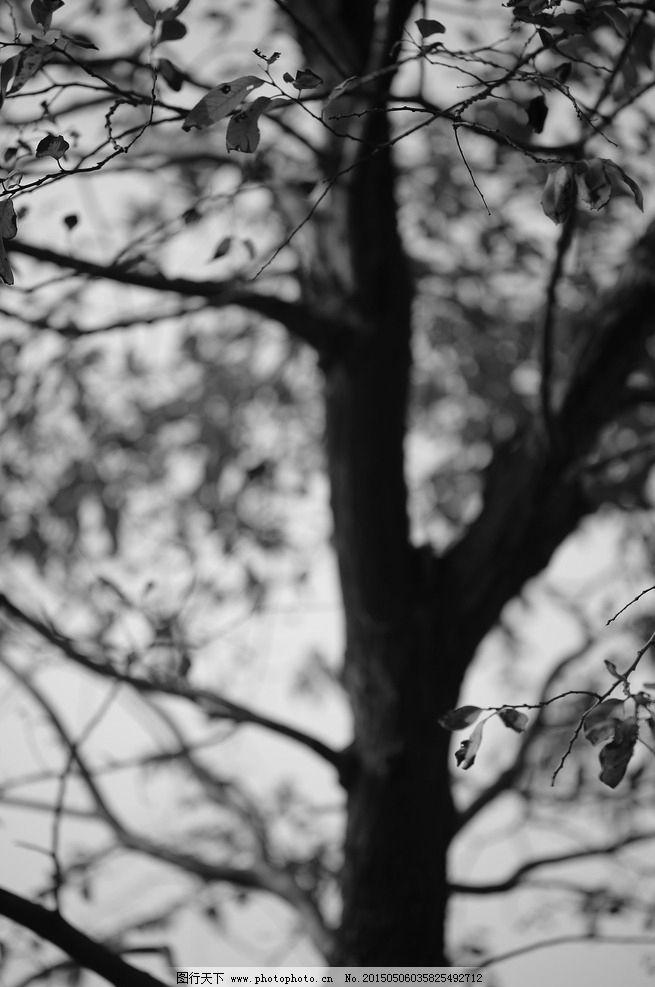 树 光影 意境 秋 黑白 树枝 摄影 生物世界 树木树叶 300dpi jpg