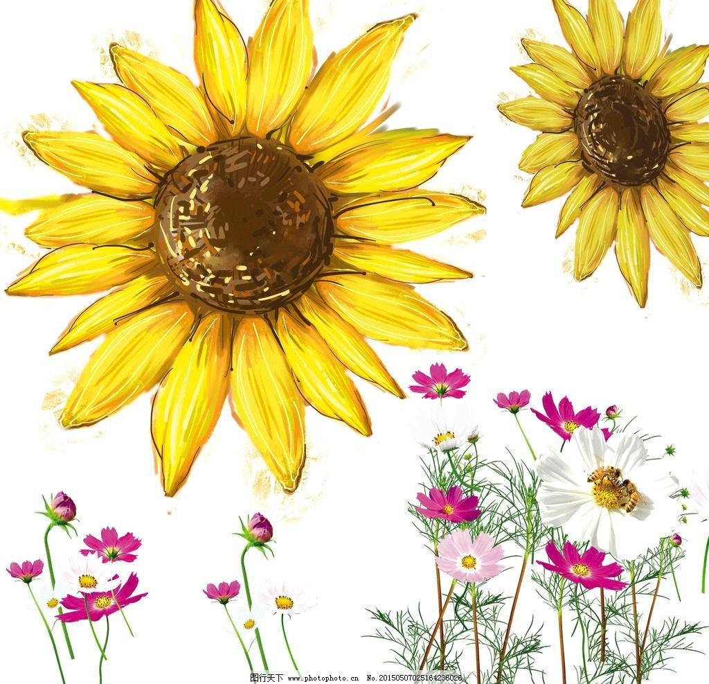 向日葵 花朵图片