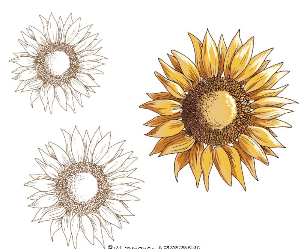 幼儿园 装饰素材 矢量装饰素材 卡通矢量素材 花朵 花朵素材 向日葵