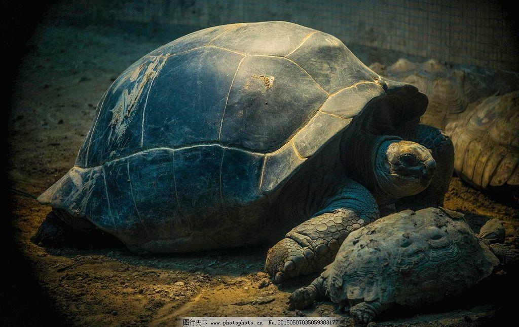 龟 乌龟 动物园 爬 大乌龟 摄影 生物世界 野生动物 72dpi jpg