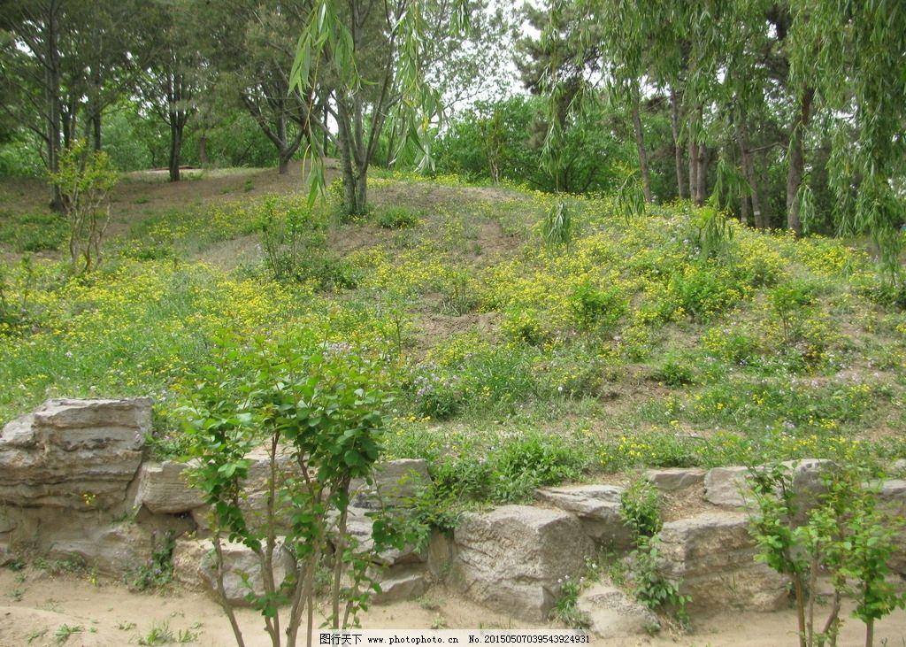 花卉 树木 树林 自然景观 风景 装饰画 绿化景观 摄影 建筑园林 园林图片