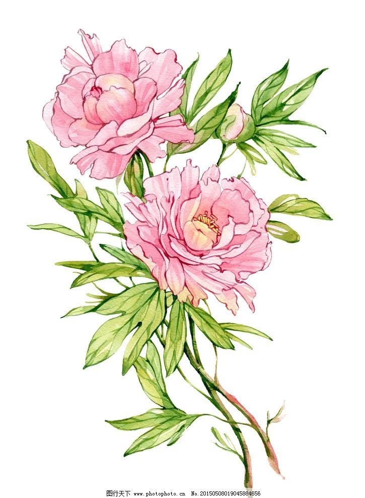 素描玫瑰花丛_彩铅手绘花朵-手绘花朵图片简单画法/铅笔画图片唯美花朵/手绘 ...