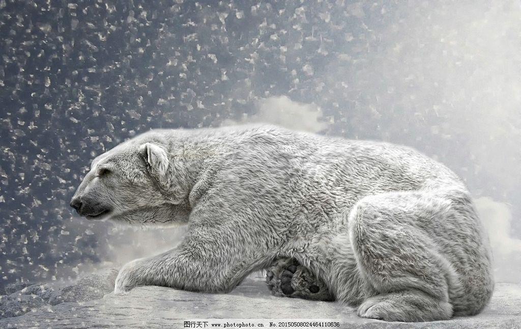 北极熊 冬天 下雪 冷 熊 设计 生物世界 野生动物 110dpi jpg