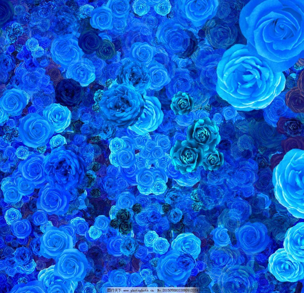 手绘 插画 蓝色 玫瑰 蓝玫瑰 蓝色花朵 蓝色背景 插画与绘画 设计