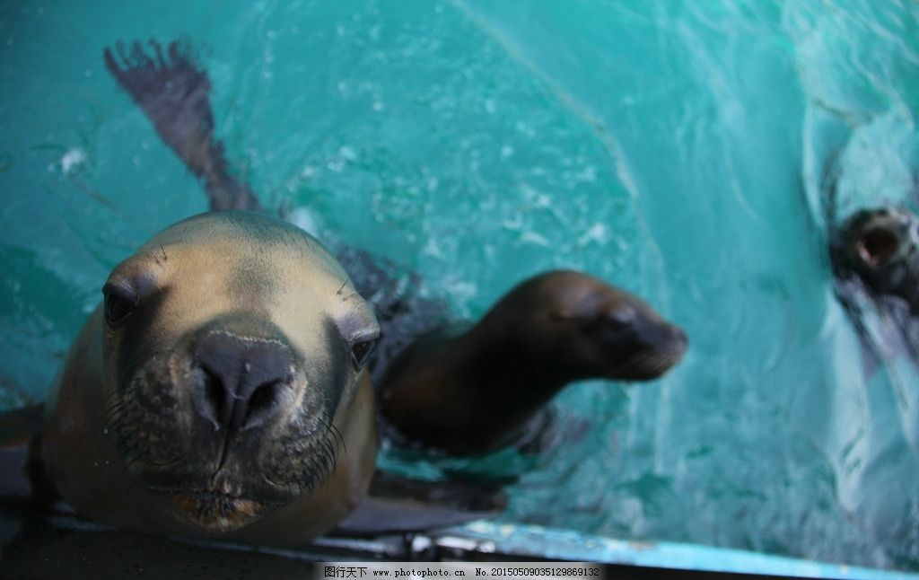 壁纸 动物 海底 海底世界 海洋动物 海洋馆 水族馆 桌面 1024_646