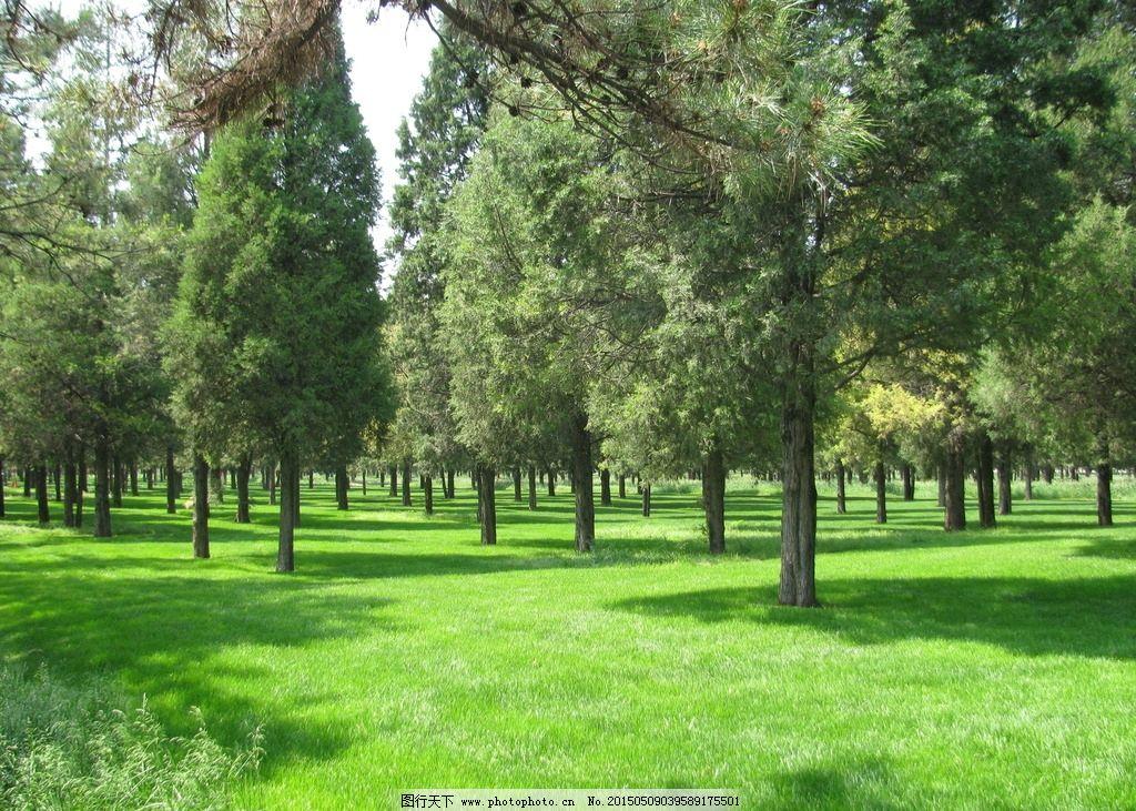 草地 绿地 树木 自然景观 风景 装饰画 绿化景观 摄影 建筑园林 园林