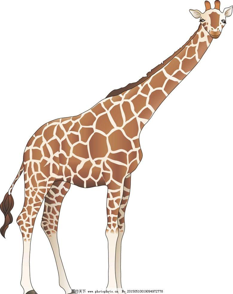 长颈鹿手绘图片