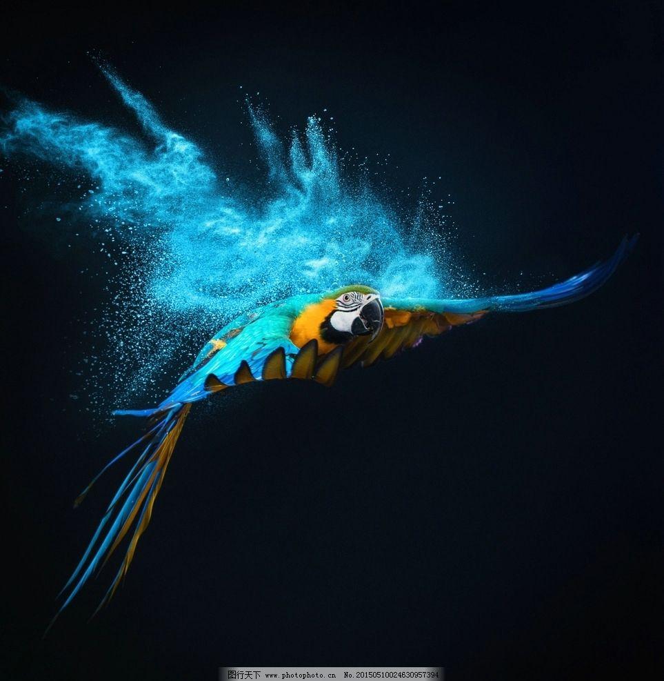 唯美 炫酷 飞翔 鹦鹉 粉末 动物 可爱 鸟类 浪漫 梦幻 设计 生物世界