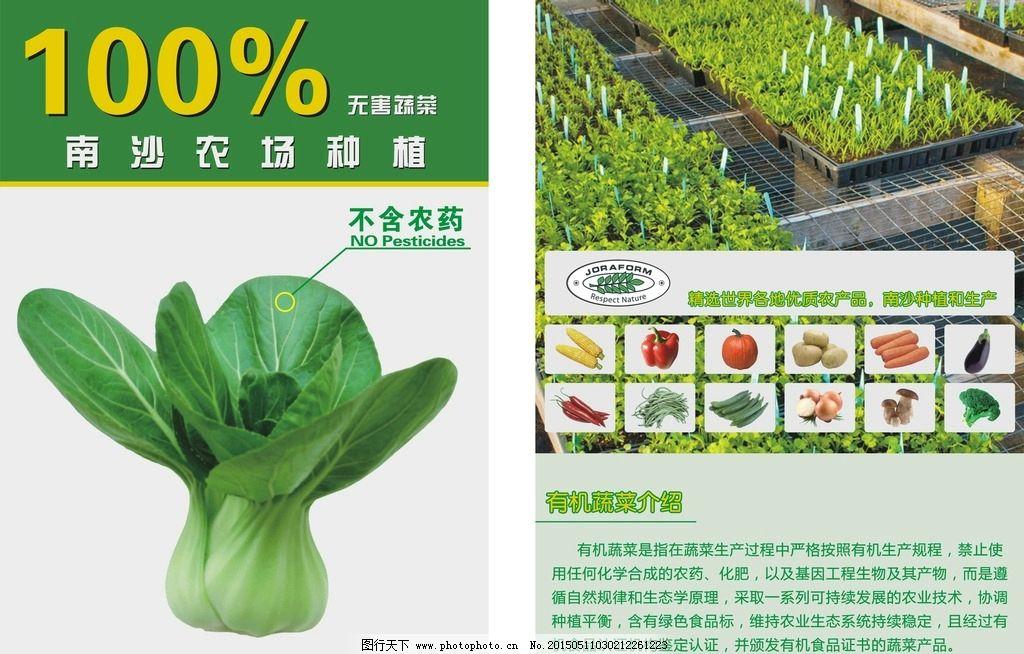 有机蔬菜宣传单图片_展板模板_广告设计_图行天下图库