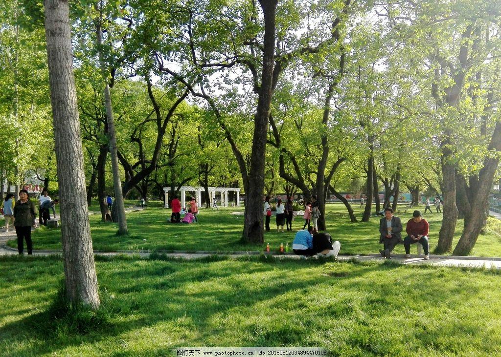 郊外草地树林自然风景