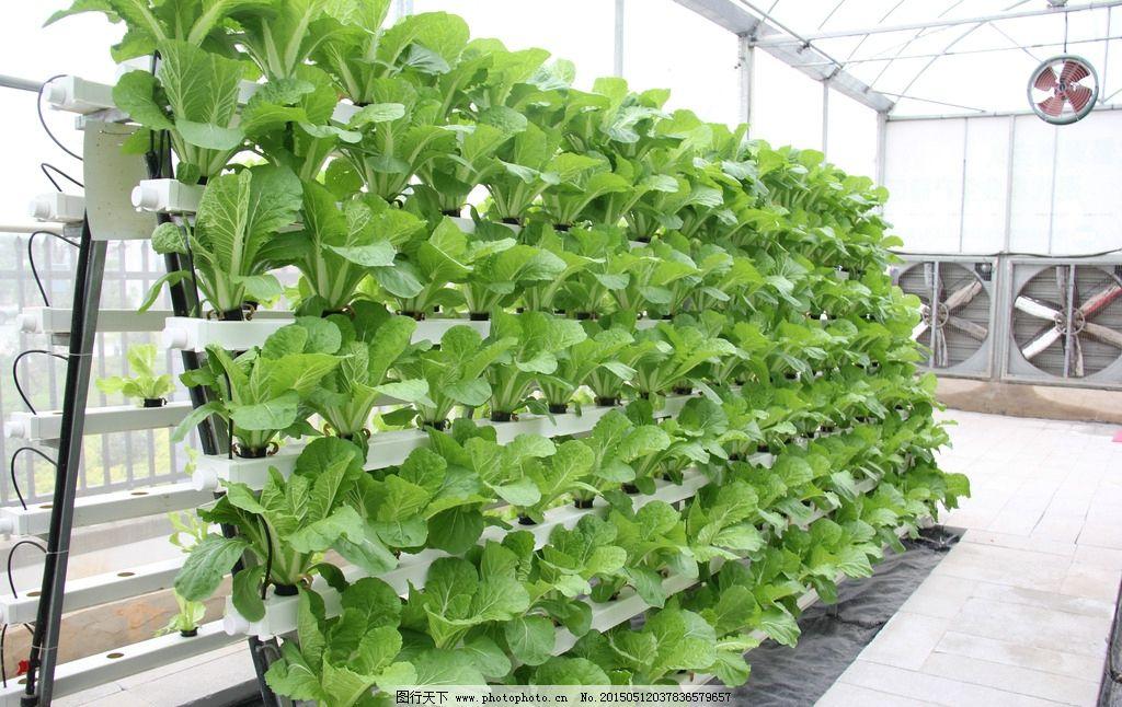管道栽培 无土栽培 现代科技 温室大棚 蔬菜 绿色食品 农业 摄影 现代