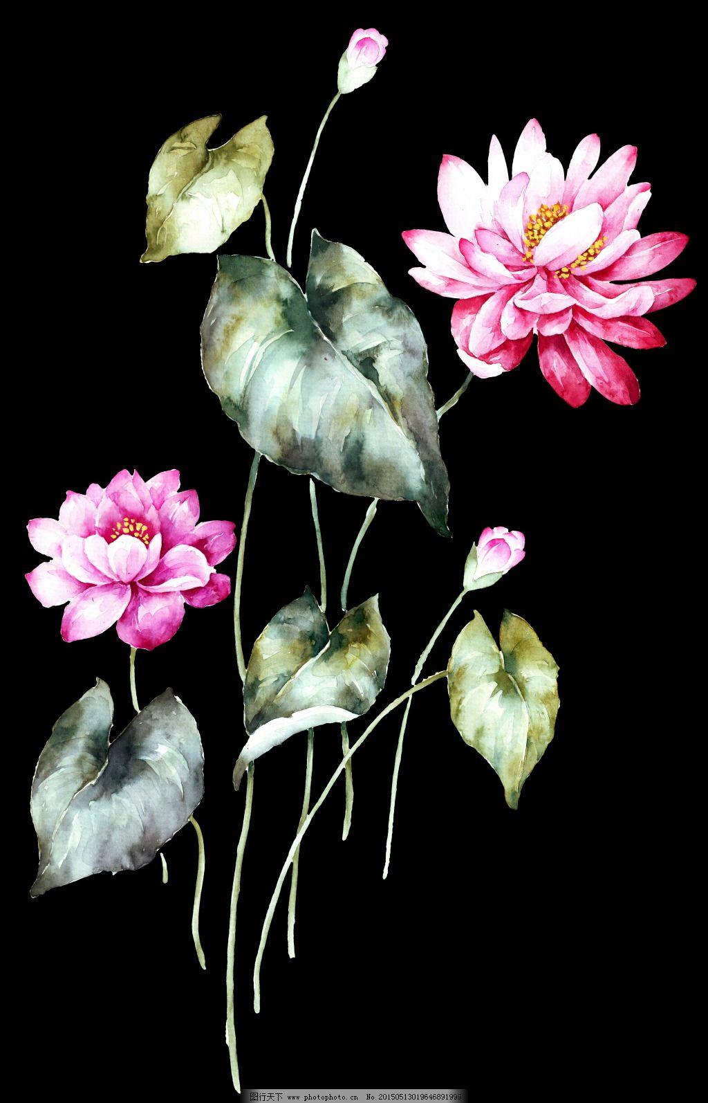 手绘荷花高清素材免费下载 黑底 手绘花 睡莲 手绘花 荷花组花 黑底
