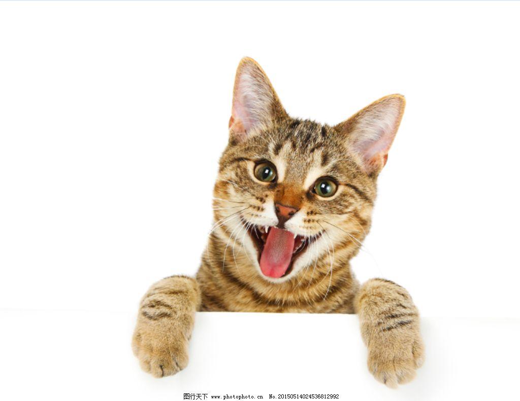 壁纸 动物 猫 猫咪 小猫 桌面 1024_789