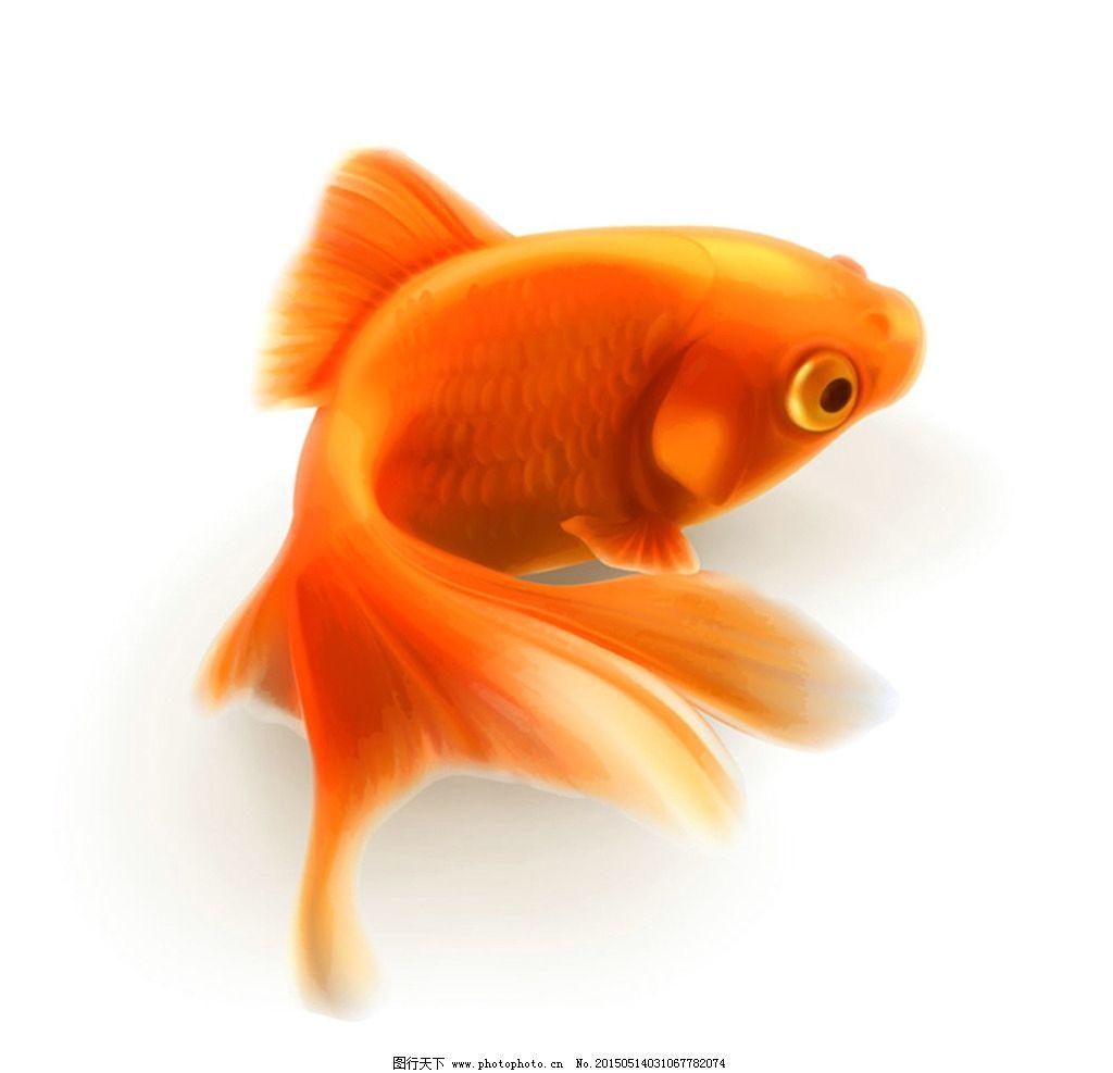 漂亮的小金鱼设计图片