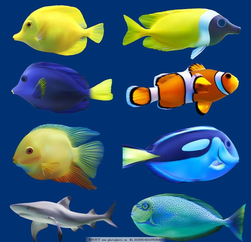 可爱的小鱼图片