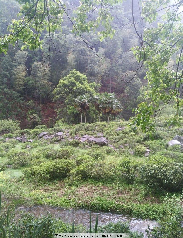 茶树生长环境图片