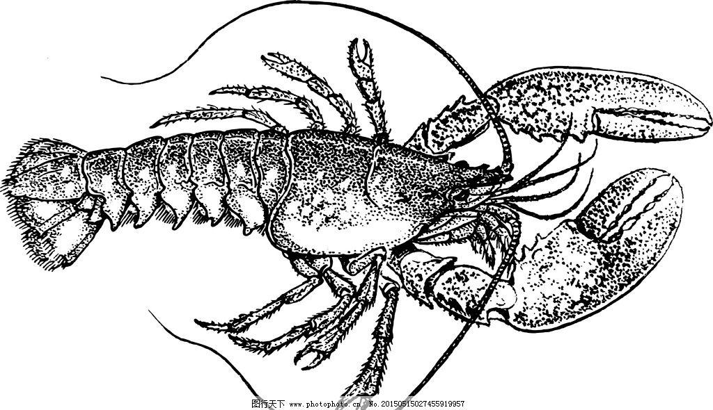手绘龙虾 澳洲龙虾 澳洲