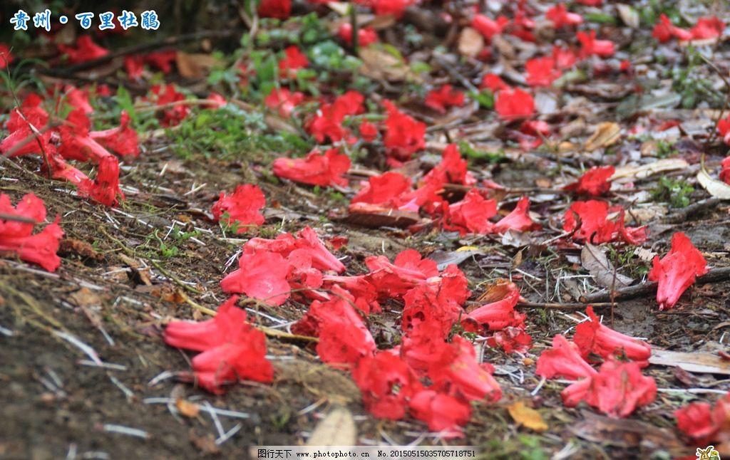 葫芦丝映山红的谱子展示