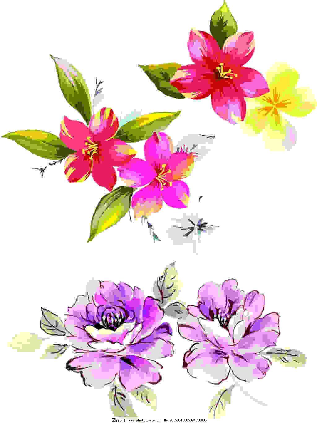 水彩牡丹花卉步骤图