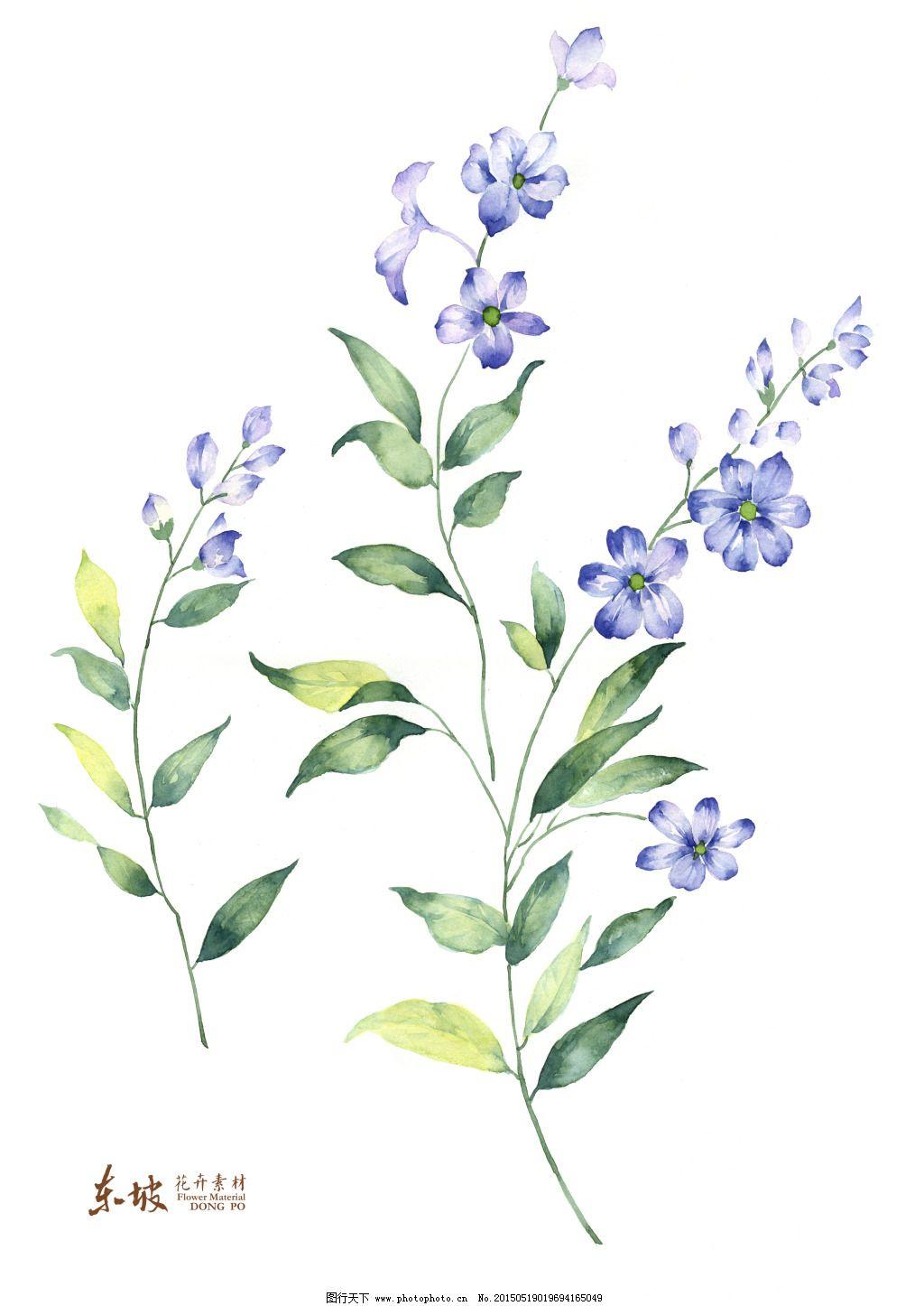 小兰花手绘免费下载 手绘花卉 优雅素材 手绘花卉 花卉高清素材 串串