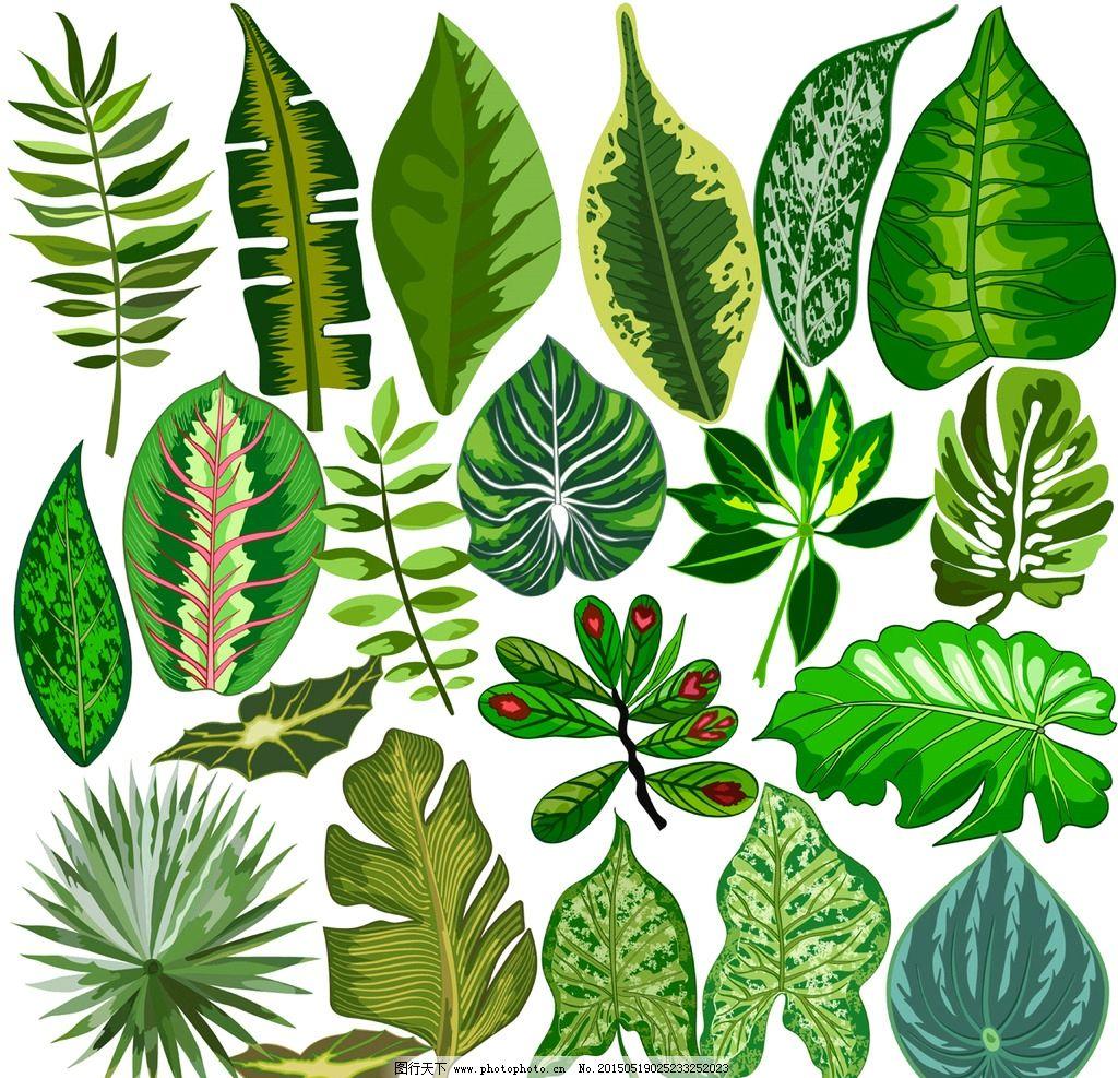 绿叶 树叶 绿色 生态 手绘 矢量 eps 设计 生物世界 树木树叶 eps