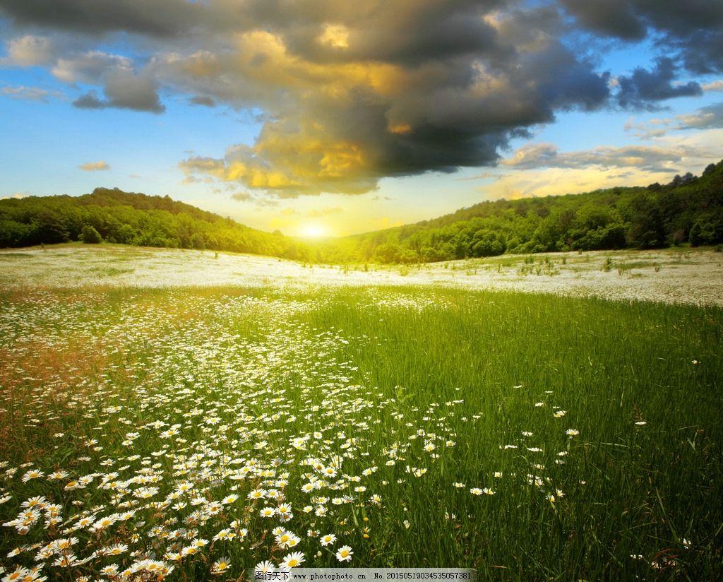 菊花风景 鲜花风景 黎明 草坪 绿草 绿叶 树林 高清图片 摄影