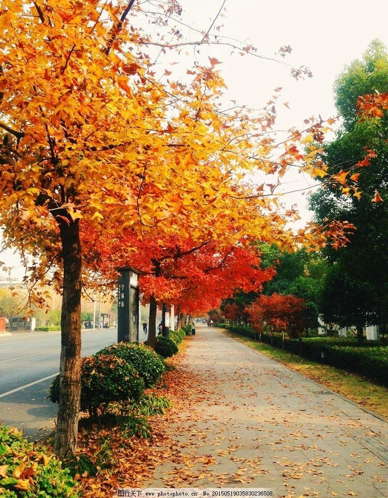 马路 落叶 秋天 深秋 树叶 道路 学林街 手机壁纸 摄影 生物世界 树木