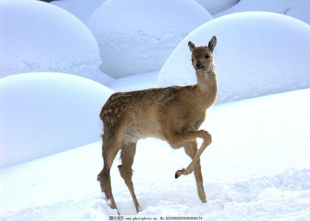 冰雪 雪乡 袍子 风光 东北 农家院 摄影 生物世界 野生动物 400dpi