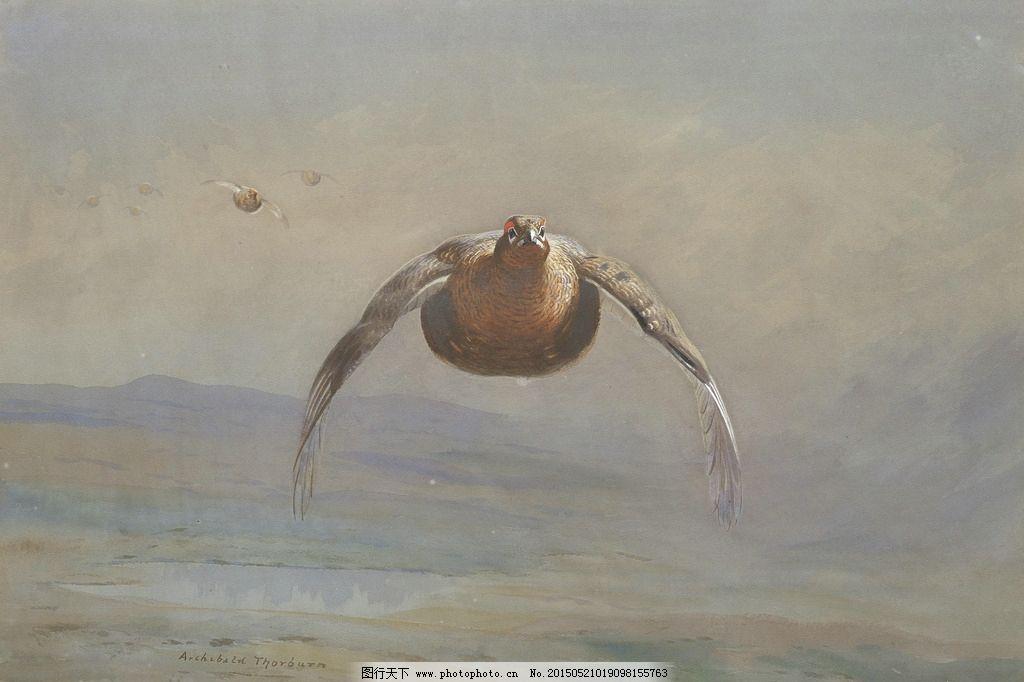 松鸡 索姆伯恩作品 英国画家 飞翔 空中 动物 水彩画