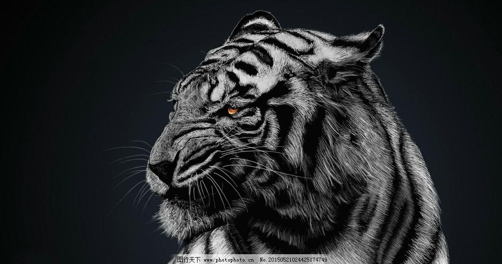 世界濒临动物--东北虎动态图