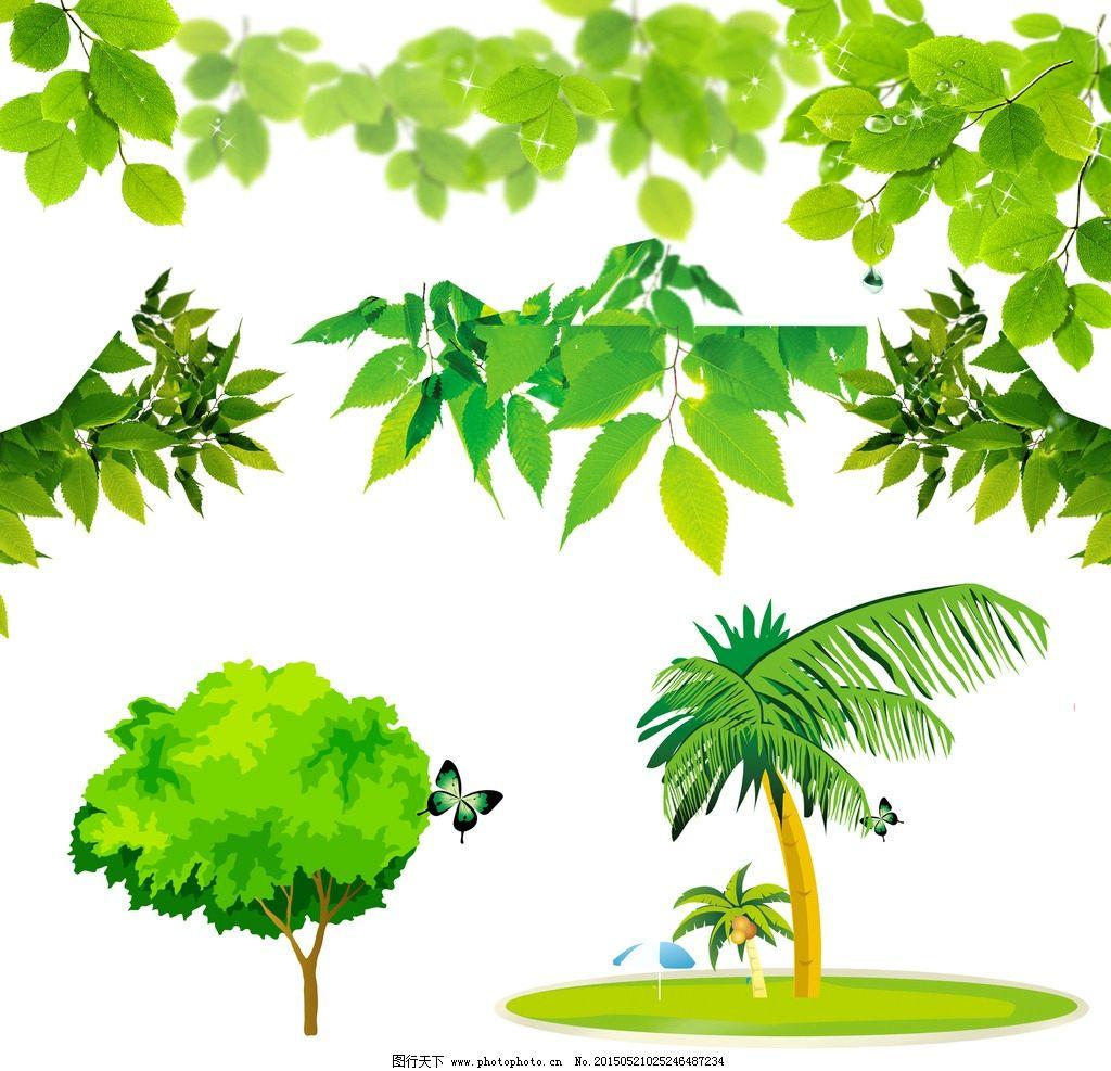 绿色树叶 椰子树图片