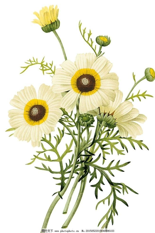 欧式花卉图片图片