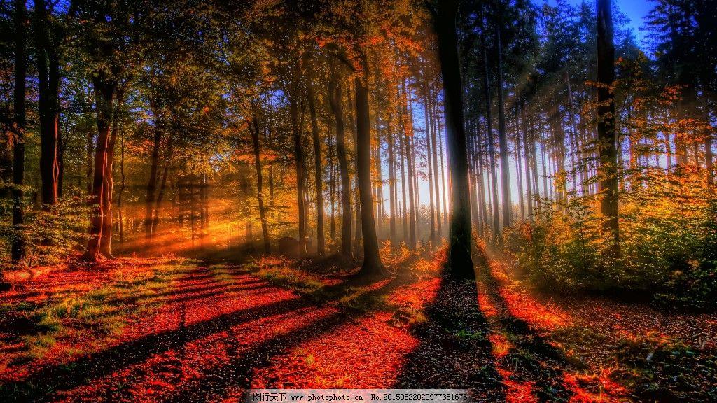 秋日阳光洒满森林唯美意境图片下载