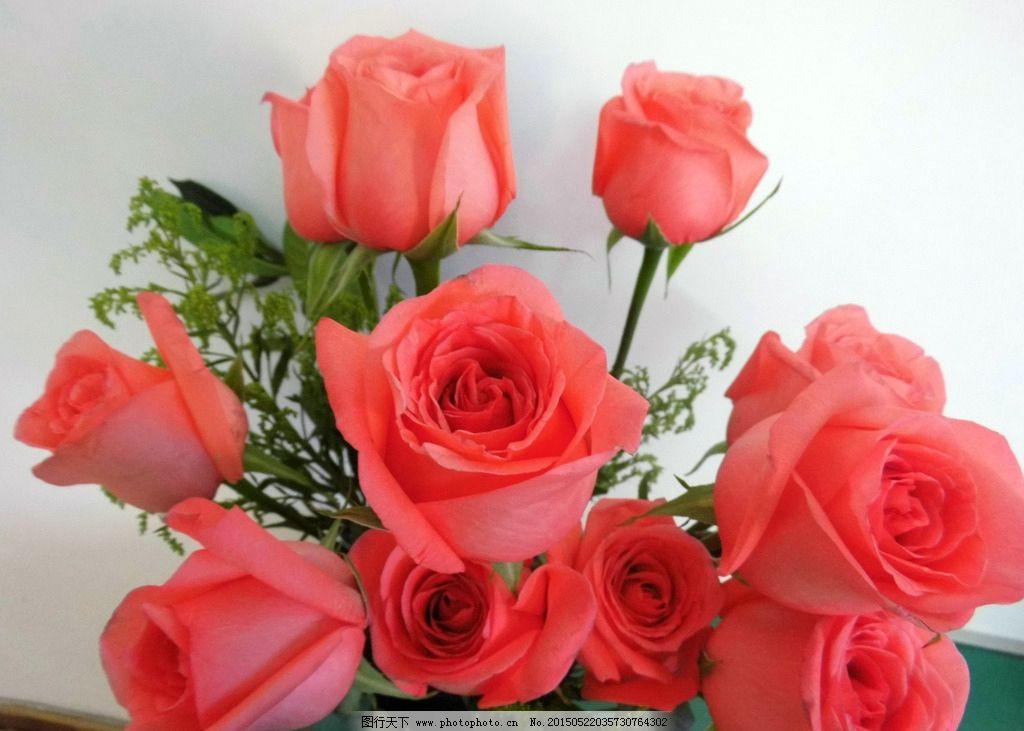 红玫瑰 粉玫瑰 玫瑰花 花卉 鲜花 植物 摄影