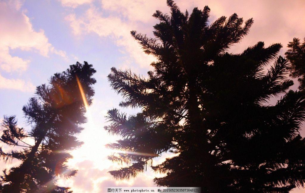 太阳 阳光 松树 蓝天 云彩 摄影 生物世界 树木树叶 72dpi jpg