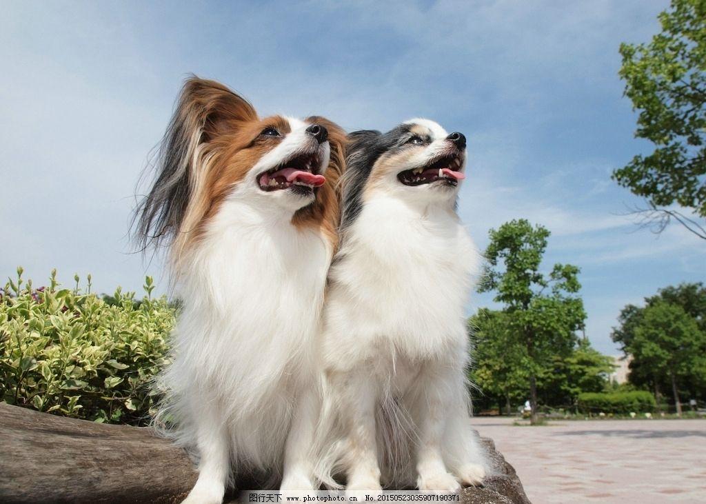 动物 狗狗 可爱 犬类 犬科 摄影 生物世界 家禽家畜 314dpi jpg