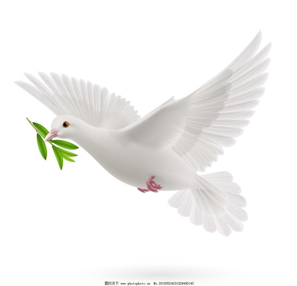 橄榄枝和白鸽的图片_和平鸽与橄榄枝图片_和平鸽与橄榄枝图片画法