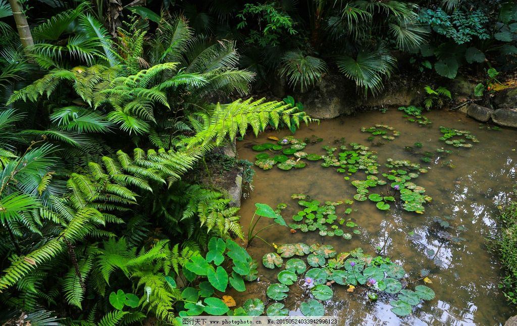 呀诺达雨林植物图片