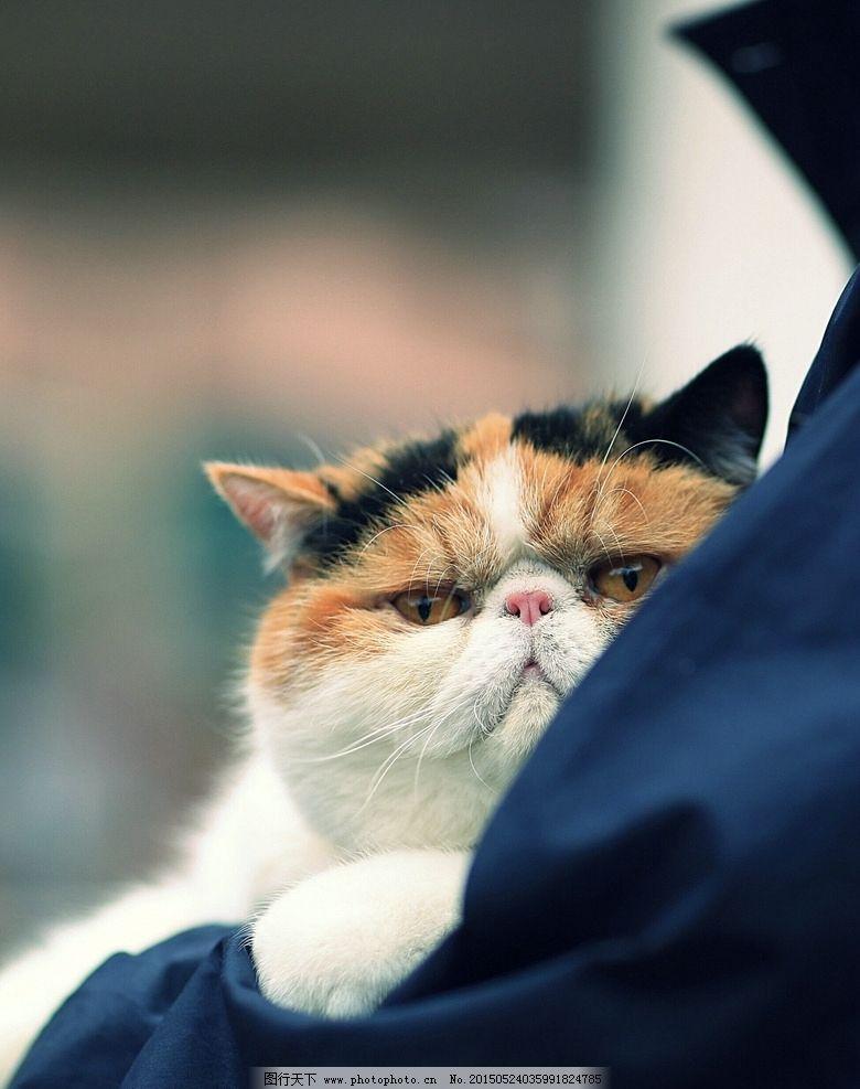 加菲猫 动物 可爱 佳能大眼睛 摄影