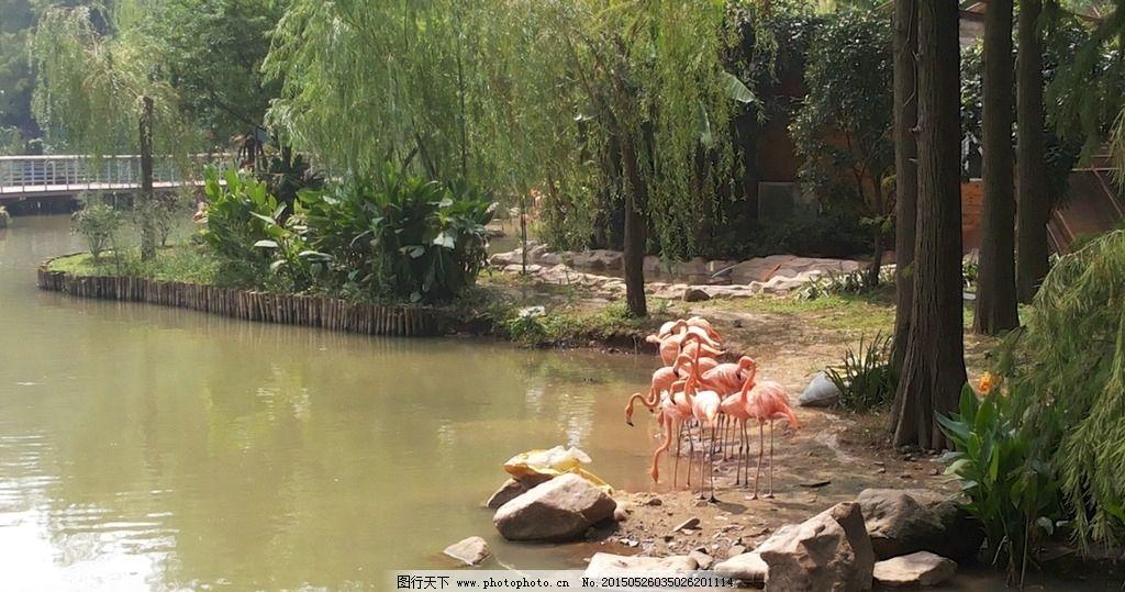 动物园 武汉动物园 野生动物园 武汉旅游 摄影 火烈鸟 红色鸵鸟