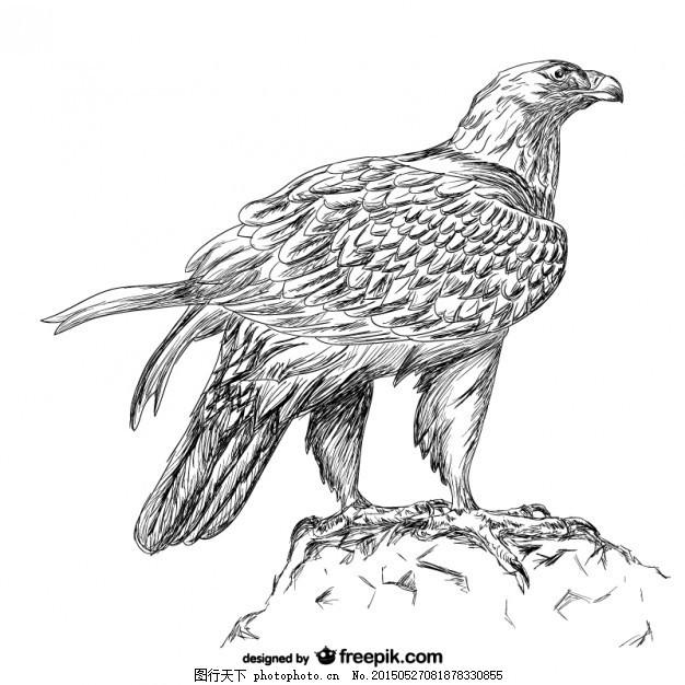 手拉鹰矢量 自然 动物 手画 手绘 轮廓 图画 鹰轮廓 白色