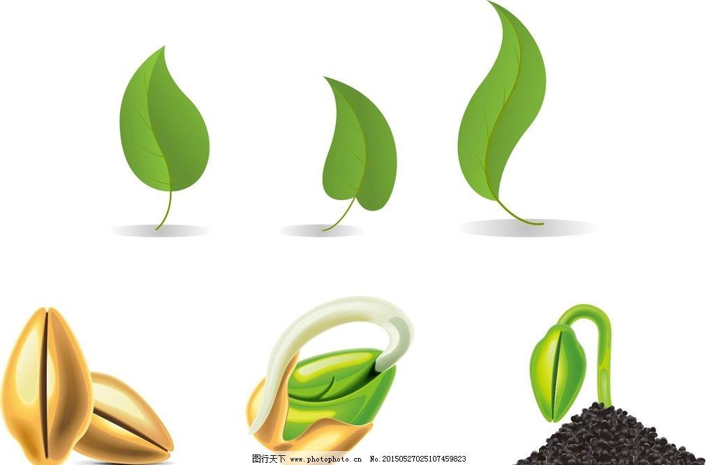 种子发芽过程图片
