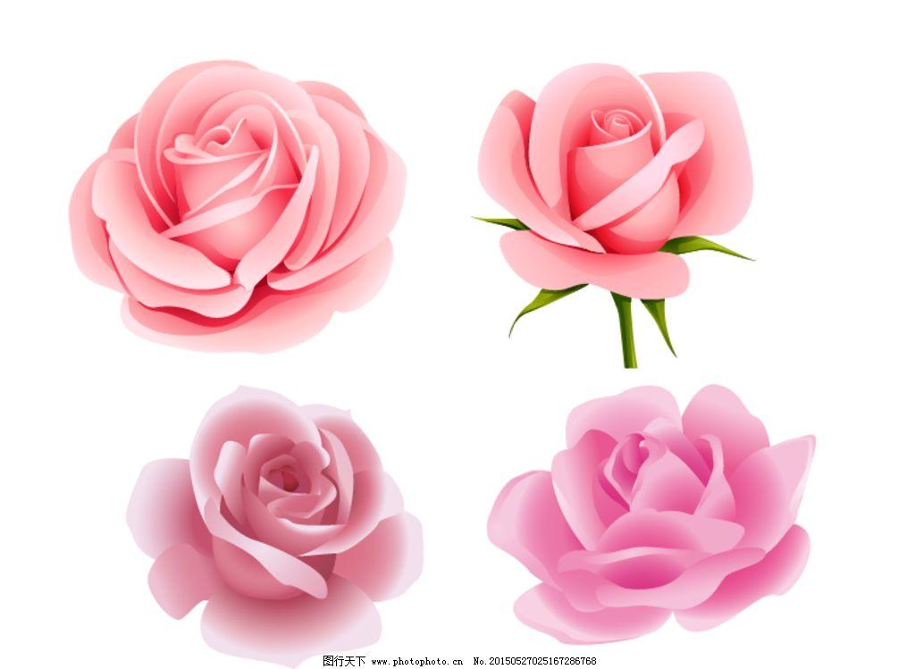 玫瑰 玫瑰花 花朵 花卉 手绘玫瑰花 矢量素材 矢量 粉玫瑰 粉色玫瑰花