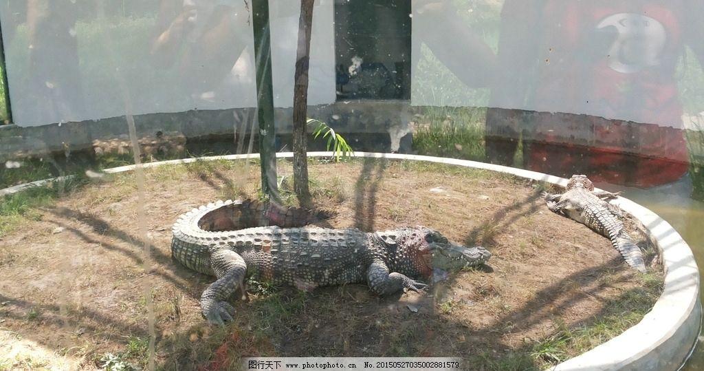 武汉动物园 野生动物园 动物园 野生动物 自然景色 鳄鱼 动物园 摄影